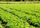 सब्जियों की अच्छी फसल के लिए छिड़कें सब्जी स्पेशल