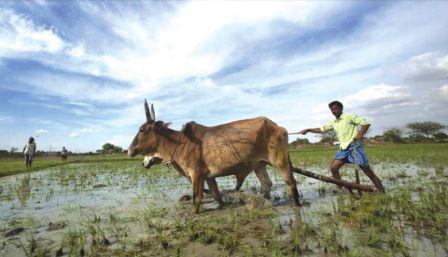 किसानों की आत्महत्याएं  नजर अंदाज
