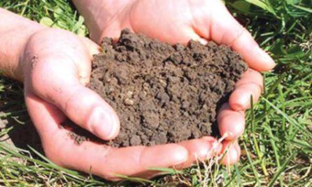 जैविक खेती बचाएगी भूमि की  उर्वराशक्ति