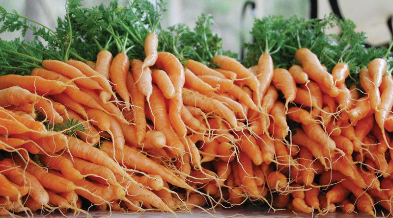 गाजर की खेती करना चाहता हूं।