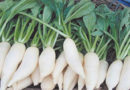 cultivate-radish