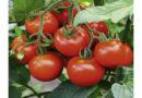 बालाघाट के किसानों को वैज्ञानिको ने बताए अच्छी फसल के गुर