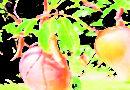 promote-mango-tree