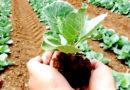 किसानों की जीवन रेखा है जैविक खेती