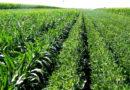 खरीफ फसलों में पौध संरक्षण