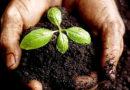 मिट्टी परीक्षण क्यों, कब और कैसे