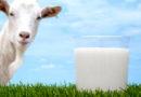 बकरियों के दूध प्रसंस्करण