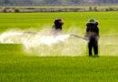 फसलों पर कीटनाशक छिड़काव के प्रभावी यंत्र