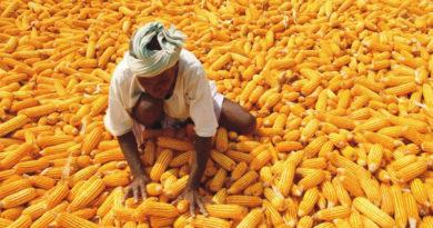 प्रदेश में 263 लाख मीट्रिक टन खरीफ उत्पादन की संभावना