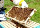 हम खेती के साथ-साथ मधुमक्खी पालन भी करना चाहते हैं इसके लिये बक्से इत्यादि कहां मिलेंगे तथा ट्रेनिंग कहां मिलेगी