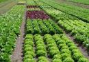 मिश्रित खेती वर्तमान की जरूरत