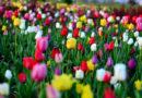 सर्दियों में आए फूलों की भरपूर बहार, ध्यान रखें उनका आहार
