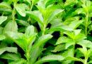 औषधीय पौधा मण्डूकपर्णी