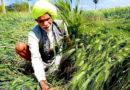खेती से हुई घरेलू खर्च में बचत