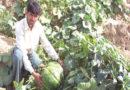 समस्या- जायद की प्रमुख सब्जियों में कीट रोगों की समस्या आती है कृपया कुछ फसलों में  उपचार बतलायें।