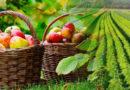 जैविक खेती से बनी पहचान