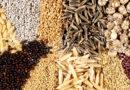 पारम्परिक बीजों के संरक्षण के लिये बीज बचाओ-कृषि बचाओ यात्रा