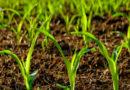 तरल जैव उर्वरक : मिट्टी व पौधों के लिए पर्यावरण सुरक्षित पोषक तत्व