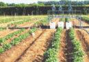 आधुनिक  कृषि में फर्टीगेशन का महत्व
