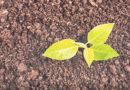 समस्या- मई माह में खेत में क्या-क्या कार्य करें ताकि खरीफ की फसल अच्छा उत्पादन दे सके।