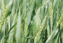 कृषि उत्पादन के नये आयाम