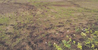 कृषि भूमि पर सरकार की  तिरछी नजर