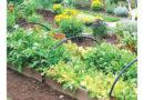 पौधशाला का रेखांकन