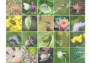 जैव विविधता पर संकट