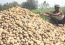 उत्तर प्रदेश में भी संकट में फंसता अन्नदाता