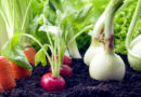 सब्जियों की पौध उन्नत तकनीक से आप भी तैयार करें