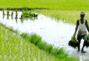 समाधान योजना में डिफाल्टर किसानों को भी मिलेगा जीरो फीसदी ब्याज पर ऋण