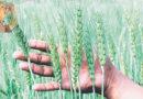 कृषि संकट की जड़ें – जावेद अनीस