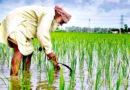 अब किसानों को मिलेगा उपज का उचित मूल्य