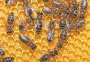 समस्या- मैं मधुमक्खी पालन करना चाहता हूं मार्गदर्शन प्रदान करें।