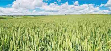 किसान उगाये तो क्या उगाये ?