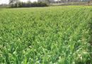 वर्षा आधारित फसलों की उत्पादकता के लिए भी कुछ करना होगा