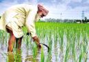 किसानों को दिया डेढ़ गुना एमएसपी का लॉलीपॉप