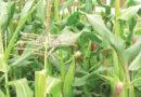 चुनावी लालीपॉप के बजाय कृषि की ठोस योजनाएं बने