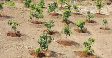 आम का पुराना बगीचा है, कतारों के बीच की खाली जमीन पर क्या कोई फसल ली जा सकती है, कृपया बतायें।