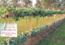 खेतों की मेड़ों पर सब्जियों और फूलों की खेती से आय होगी दोगुनी