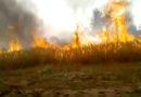गेहूं की कटाई के बाद खेत में आग लगाने से हमें पोषक तत्वों का कितना नुकसान होता है