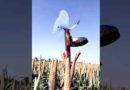 खेत से पक्षी भगाने की अनोखी जुगाड़