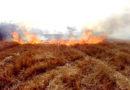 नरवाई जलाने से बंजर हो रही खेतों की कोख