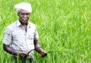किसानों की आमदनी दुगनी करने में