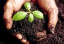 जैव उर्वरकों का फसलों एवं सब्जियों में उपयोग एवं महत्व