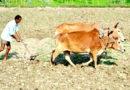 कृषि कार्य में लागत घटायें, लाभ कमायें