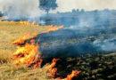 नरवाई जलाने से बचें किसान : डॉ. तांबे