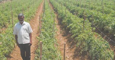 टमाटर-बैंगन की खेती से राजेन्द्र को लाभ ही लाभ