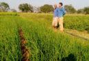 पन्ना – क्यारी विधि से प्याज की खेती