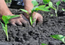 जैविक कृषि पाठशाला के प्रणेता का सम्मान